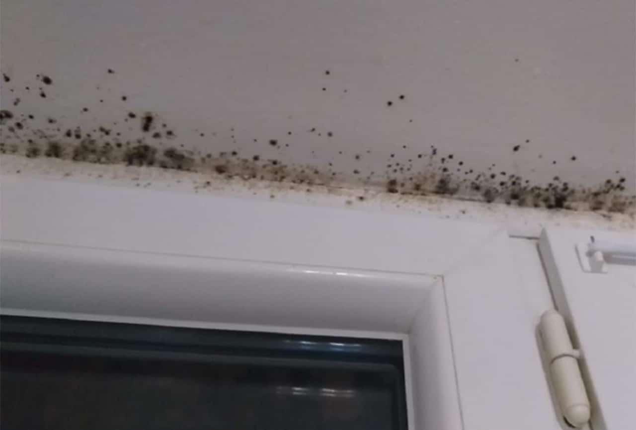 Nos conseils et préconisations pour réduire l'humidité dans un logement